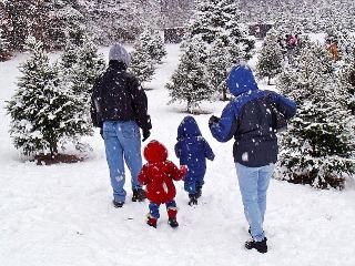 Massachusetts Christmas Tree Association