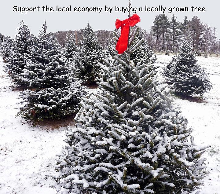 MCTA Member Photos | Massachusetts Christmas Tree Association